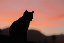 Silhouette Of Cat In The Late Afternoon Sunset Pussy Puss