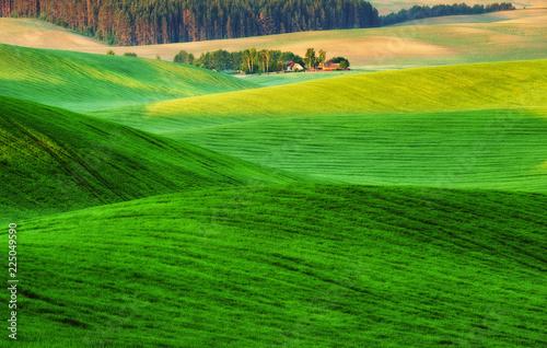 Foto op Plexiglas Groene picturesque hilly field. green wavy field