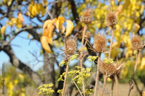 Fotografia, Obraz  Broadleaf in fall day