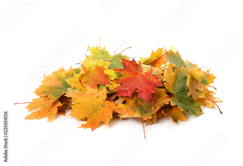 Photo Pile of autumn colored leaves isolated on white background