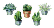 Cactus And Succulent In Pot Isolated On White Watercolor. Watercolor Echeveria Illustration, Botanical Painting Of Dudleya And Zwartkop. Sempervivum Art.
