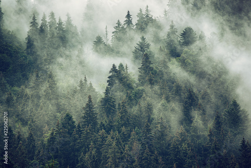 Foto auf Leinwand Rosa dunkel Misty landscape with fir forest in hipster vintage retro style