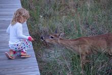 Little Girl Feeding And Pettin...