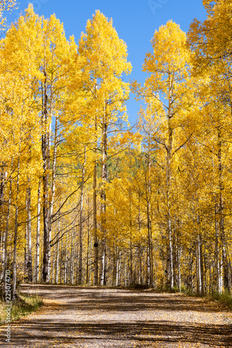 Fototapety, obrazy: Beautiful and Colorful Colorado Rocky Mountain Autumn Scenery