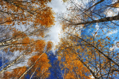 Foto op Plexiglas Herfst crowns of autumn trees. branches against the sky