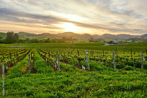 Keuken foto achterwand Centraal-Amerika Landen Vineyards at sunset in California, USA