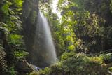 Los Tilos Waterfall in La Palma, Canary Islands