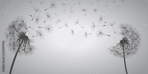 Abstract white dandelions, dandelion with flying seeds - vector