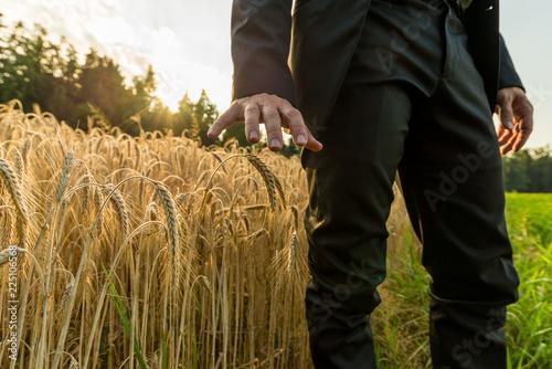 Fotografie, Obraz  Businessman standing in summer wheat field