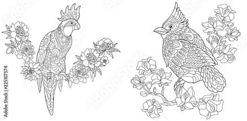 Naklejka premium Kolorowanki z papugą kakadu i kardynałem północnym