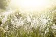 Leinwandbild Motiv White flower meadow with bright warm morning light.