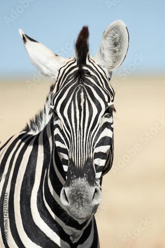Tuinposter Zebra Vertical portrait of a zebra.