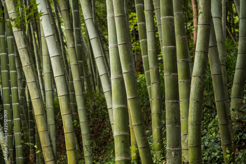 Foto op Plexiglas Bamboe thick trunk bamboo forest inside park