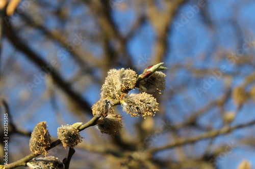 Tuinposter Lente spring