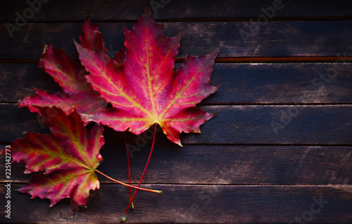 bright autumn maple leaves on wooden table