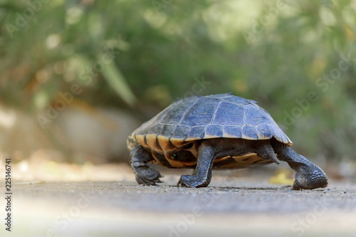 Foto op Aluminium Schildpad The turtles are walking in the sunlit streets.