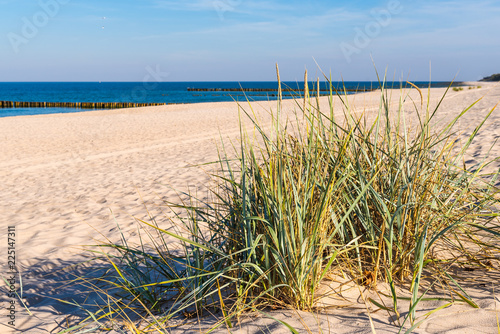 Staande foto Strand Grass, white sand dunes beach on the shore of the Baltic Sea. Poland.