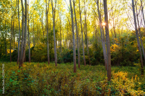 Foto op Canvas Herfst Colorful autumn forest scene