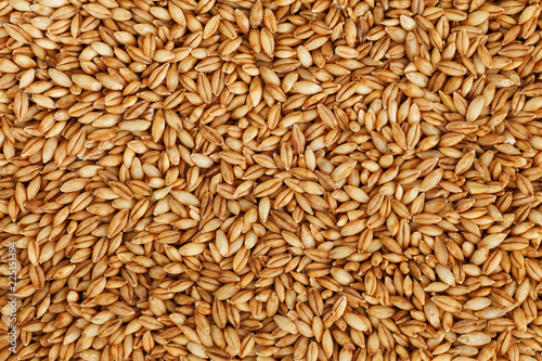 heap of pearl barley grains, vegetarian food Poster Mural XXL