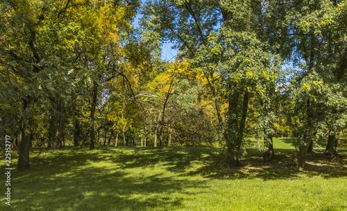 Papiers peints Forets Golden Polish autumn. Autumn colors. Cracow. Poland