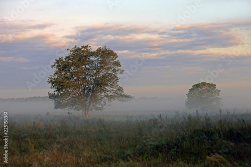 Fotobehang Bomen two trees in the field covered with fog on the background of red blue clouds
