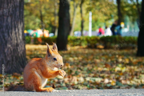 Tuinposter Eekhoorn squirrel in autumn park