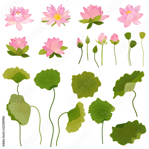 Hand Drawn Illustration of Lotus Flowers and Leaves, Retro Floral Set for Fashion Print, Birthday Decoration Wallpaper in vector