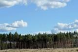 Fototapeta Na sufit - Niebo nad lasem