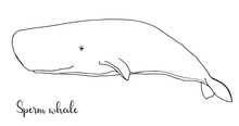 Hand Drawn Sperm Whale. Vector Illustration In Sketch Style.