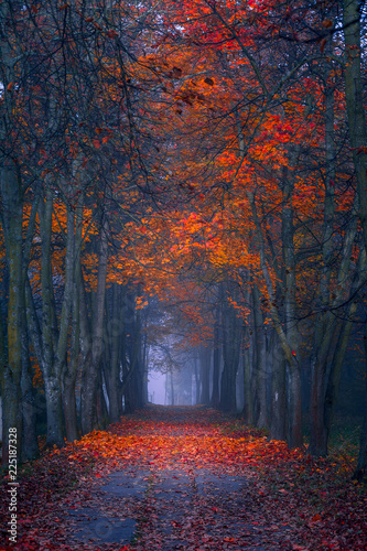Foto op Aluminium Nachtblauw Autumn fall. Foggy morning in the maple forest. Vibrant colors