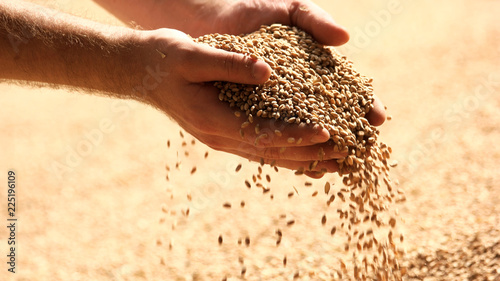 Fotografia Wheat grains in hands at mill storage