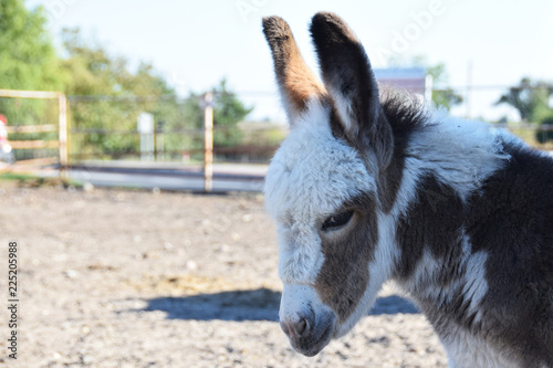 Deurstickers Ezel a small bumbling donkey in the yard