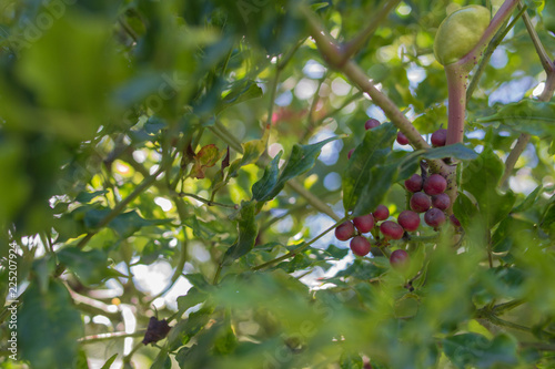 Fotografie, Obraz  Forest fruits with striking color red and texture