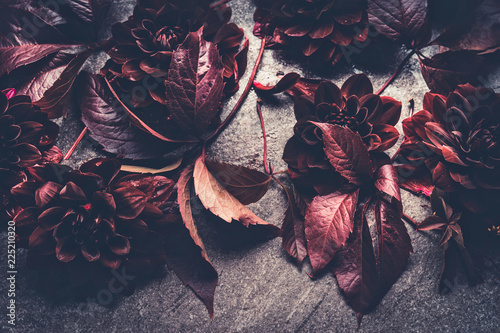 Fotografía Dark red dahlias bloom layout