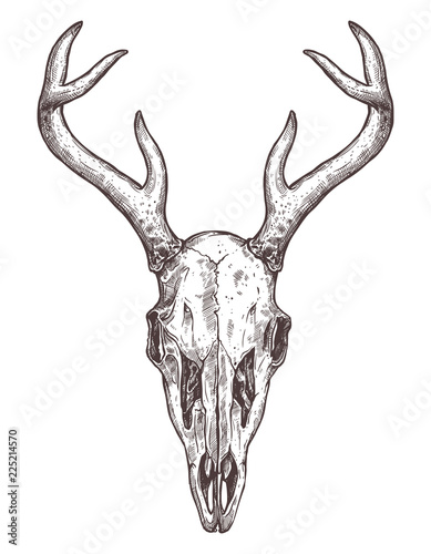 Türaufkleber Aquarell Schädel Sketch Of Deer Skull. Boho Hand Drawn Illustration