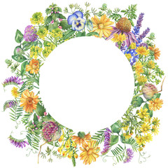 Fototapeta Łąka Banner, round frame with flowering wildflowers, medicinal herbs. Watercolor hand drawn painting illustration isolated on a white background.