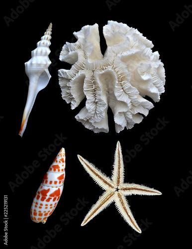 white coral, starfish, and seashells on black background