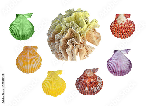 A  coral and seashells isolated on white background