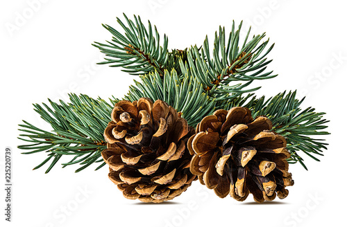 Brown pine cone on white background with clipping pass Fototapeta