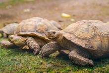 Turtles On Grass Detail Close ...