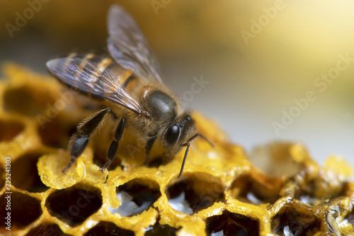 Tuinposter Macrofotografie Honey Bees on beehive.