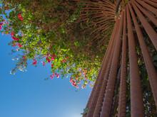 Flowers And Sky On A Trellis