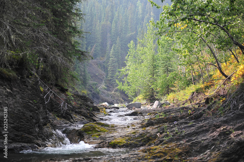 Fotografía  Small Hidden Mountain Stream in Sheep River Provincial Park, Alberta