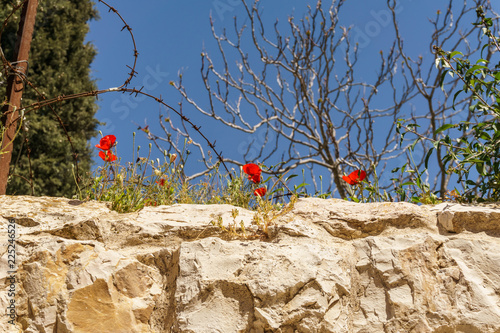 Foto op Aluminium Oude gebouw wall of an ancient fortress old Jerusalem city with flowers on top.