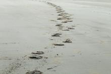 Horse Hoof Prints On Sandy Beach