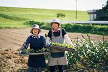 苗を植える前の女性達