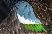Teal Duck Feathers