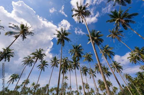 Coconut palm tree under blue sky on beautiful tropical beach