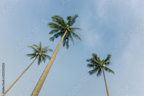 Foto op Plexiglas Palm boom palm tree in the blue sky.