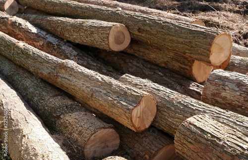 Fotografie, Obraz  A pile of cut and stacked logs in the sun in Warren county in northwest Pennsylv